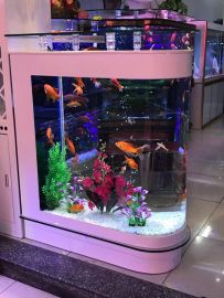 Akvarium Carmita